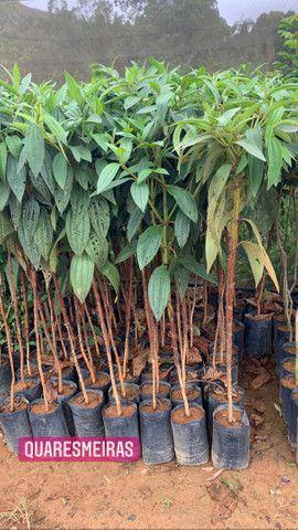 Reflorestamento e plantas paras jardins - Foto 5