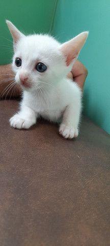 Doação de gatos pessoas responsáveis. - Foto 4