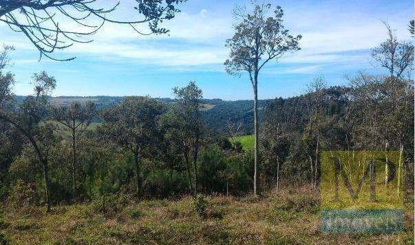 Sítio à venda, 44300 m² por R$ 900.000,00 - Zona Rural - Rio Negrinho/SC - Foto 11