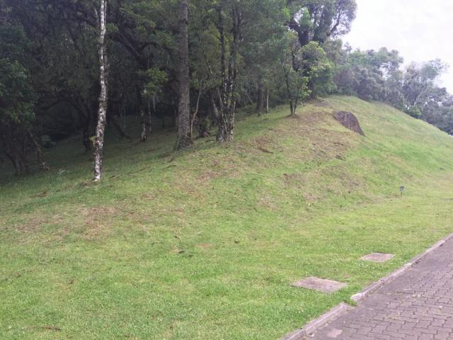 Terreno à venda, 1050 m² por r$ 779.249,00 - centro - canela/rs - Foto 5