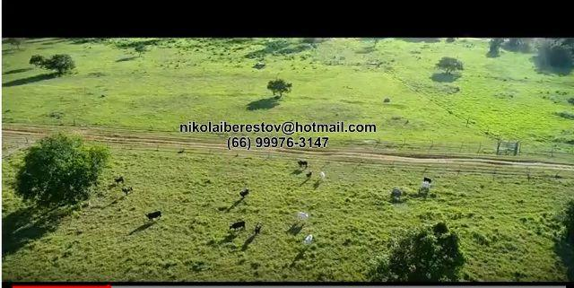Fazenda 4.000 hectares vale do araguaia mt