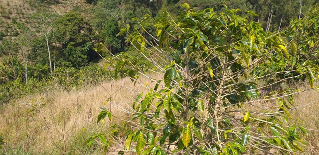 Sitio perto china parque 15.000 60mil outro 10,000 50mil os dois 95mil arace pedra azul - Foto 5