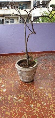 Vasos antigos de cimento - Foto 2
