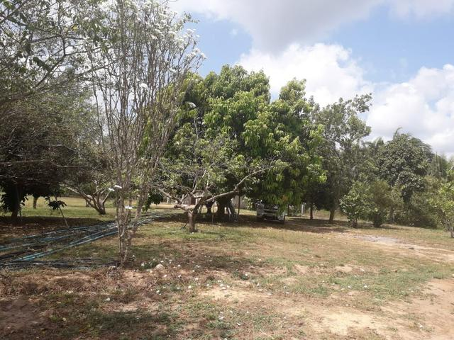 Fazenda em Santa Rita parcelada e sem juros!!! - Foto 4