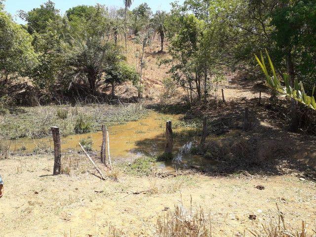 Terra assentamento 30 anos 7 alqueires  - Foto 18