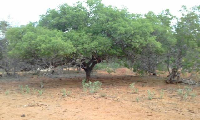 Exploração de Minério , terreno para plantação e criação de gado - Foto 13