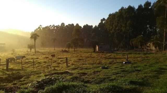 Alugo sitio 2,5 hectares - Foto 3