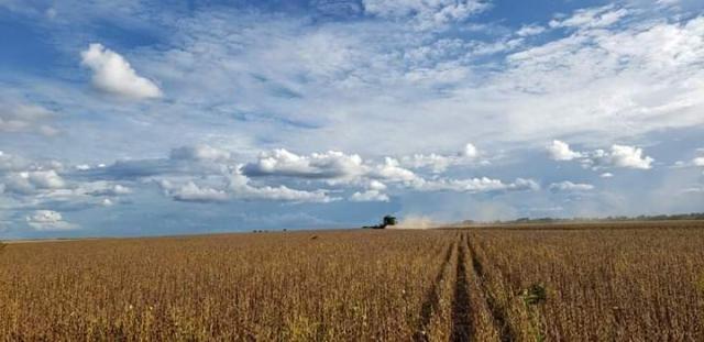 8271 | Fazenda à venda com 10 quartos em ZONA RURAL, BALSAS - Foto 8
