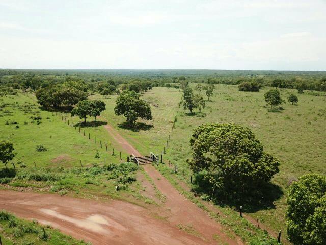 Fazenda Gurupi Tocantins