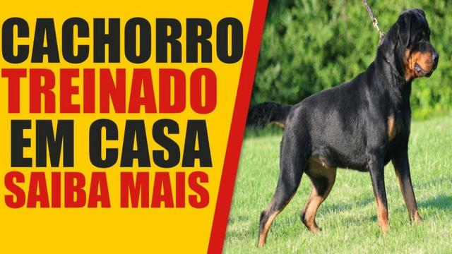 Adestramento Fácil para Cachorros - Foto 2