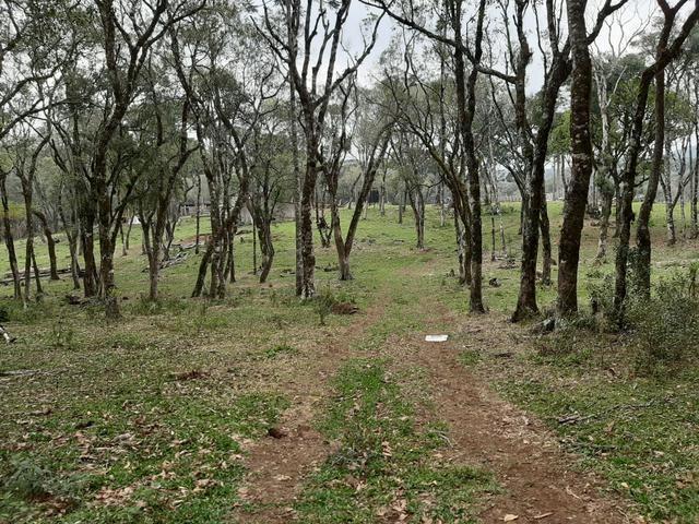 Fazenda de 100 Alqueires. 70 de capoeira - 16 km da Colônia Vitória. Guarapuava PR - Foto 10