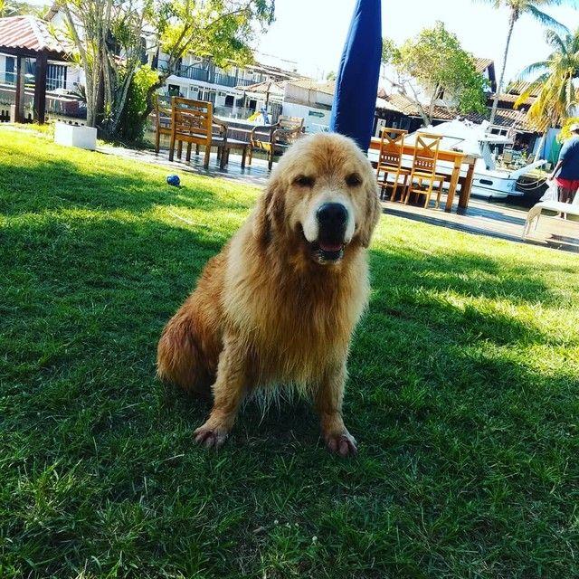 Adestrador de cães - Foto 6