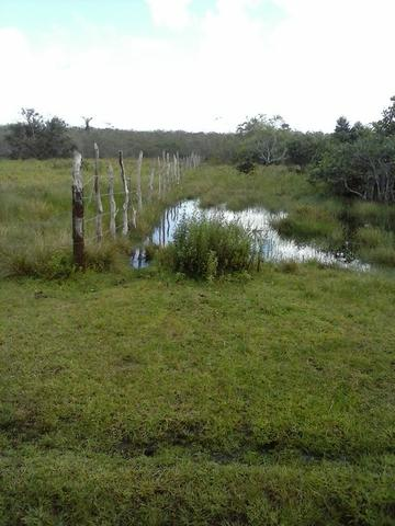 Jenipapo 840.000m2 pasto e floresta nativa - Foto 12
