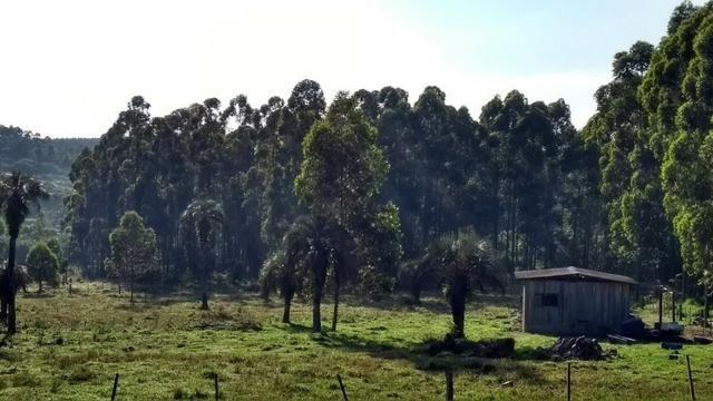 Alugo sitio 2,5 hectares - Foto 4