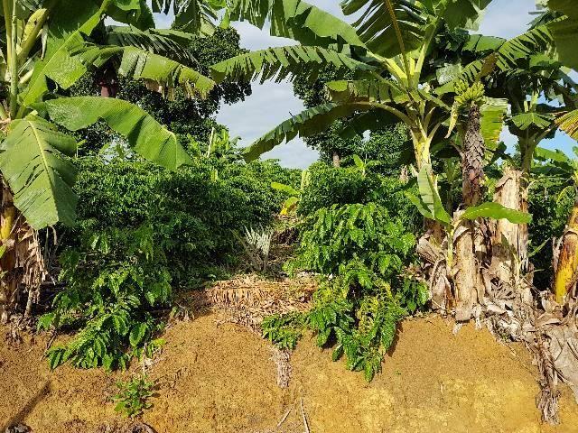 Sítio em Colatina na ES 248 na beira do Rio Doce - Foto 12