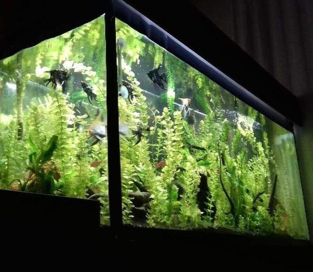 Procuro por aquário