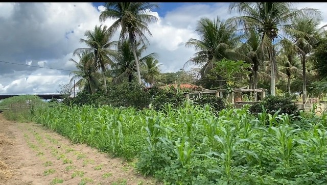 Fazenda em São Gonçalo dos Campos  - Foto 3