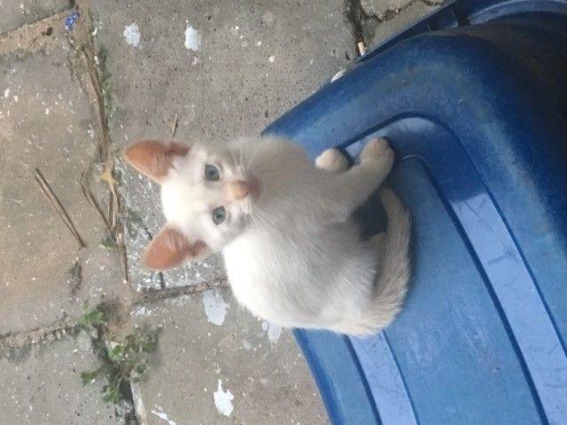 gatinhos para doação  - Foto 6
