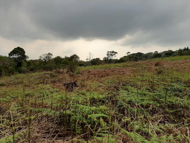 Fazenda de 100 Alqueires. 70 de capoeira - 16 km da Colônia Vitória. Guarapuava PR - Foto 15