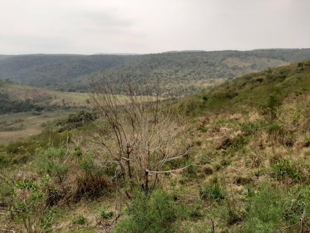 Fazenda de 100 Alqueires. 70 de capoeira - 16 km da Colônia Vitória. Guarapuava PR - Foto 20