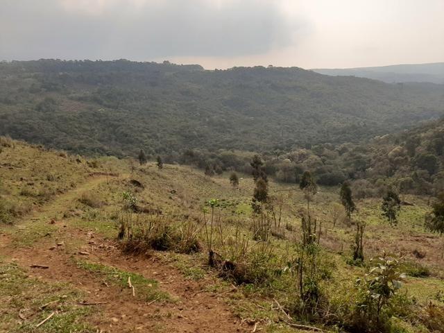 Fazenda de 100 Alqueires. 70 de capoeira - 16 km da Colônia Vitória. Guarapuava PR - Foto 13