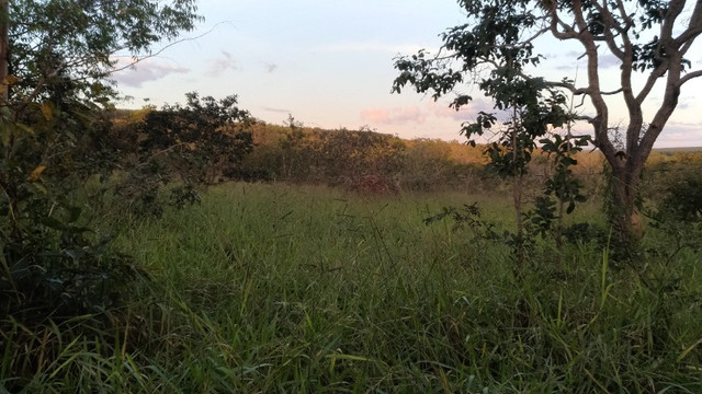 Sitio 20,10 hectares - Foto 11