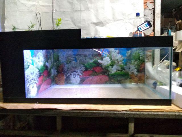 Aquaterrario e aquários - Foto 2