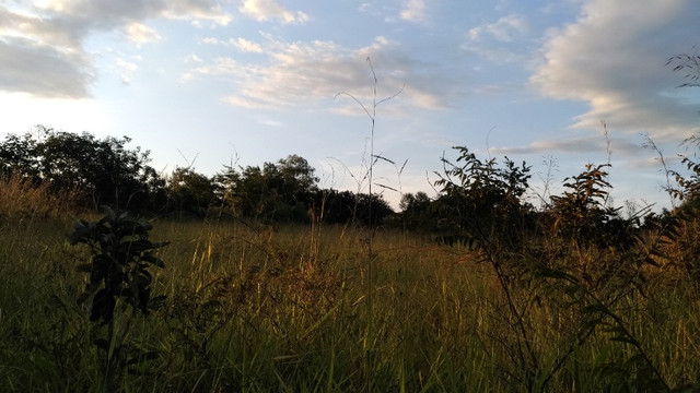 Sitio 20,10 hectares - Foto 5