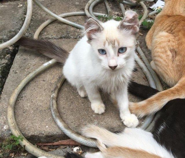 gatinhos para doação  - Foto 3
