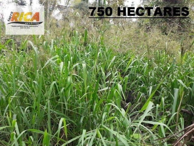Fazenda à venda, com 750 hectares na Área Rural de Porto Velho/RO