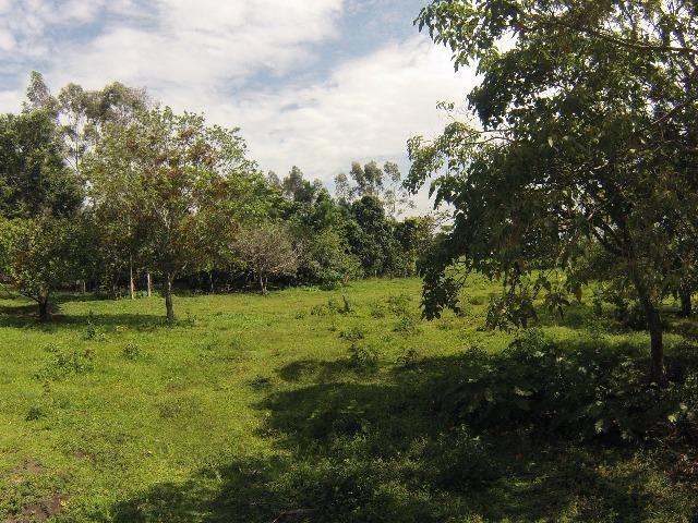 Fazenda Goianira 8 alqueres - Foto 8