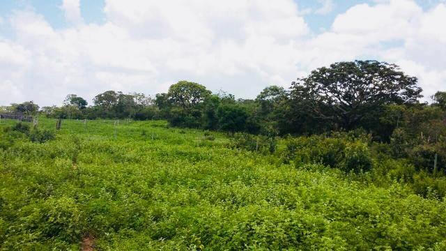 Fazenda Buritizeiro - Foto 5
