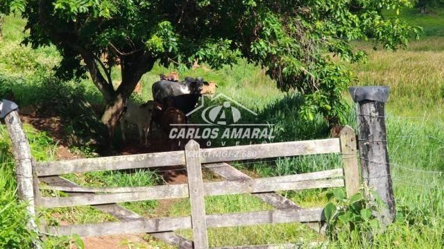 Fazenda à venda, , zona rural - carlos chagas/mg - Foto 11
