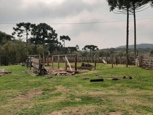 Fazenda de 100 Alqueires. 70 de capoeira - 16 km da Colônia Vitória. Guarapuava PR - Foto 3