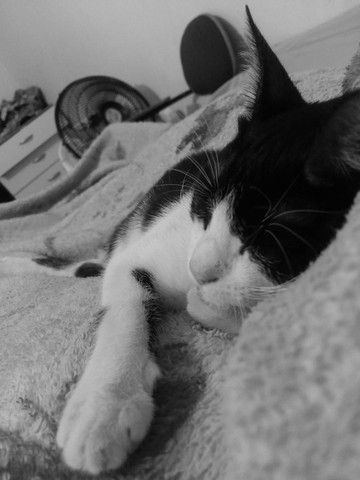 Doando gatinha  - Foto 3
