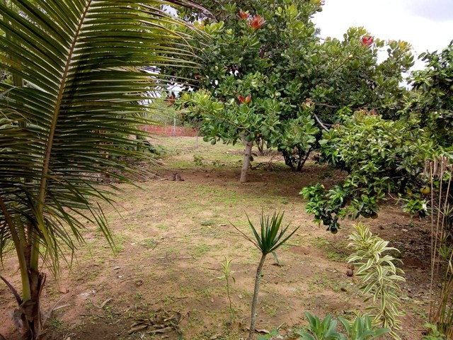 Sítio em São José (Distrito de Maria Quitéria) - Foto 12