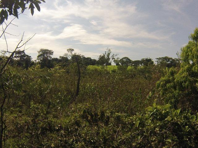 Fazenda Goianira 8 alqueres - Foto 13