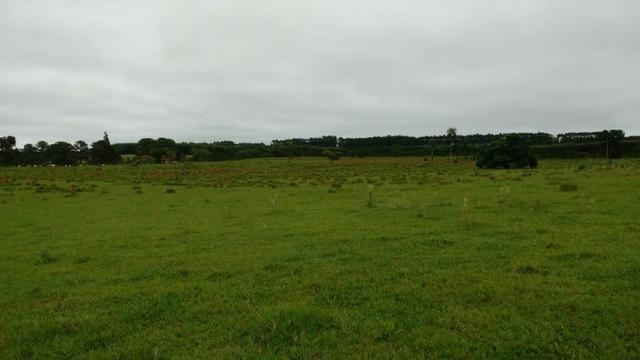 Otima fazenda com 73 alqueires na regiao de itapetininga - Foto 9