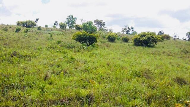 Fazenda Buritizeiro - Foto 6