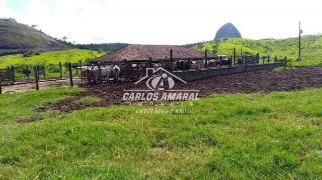 Fazenda à venda, , zona rural - carlos chagas/mg - Foto 5