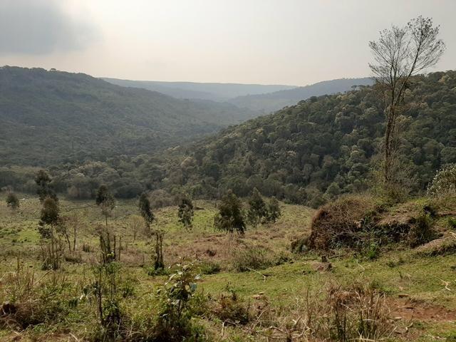 Fazenda de 100 Alqueires. 70 de capoeira - 16 km da Colônia Vitória. Guarapuava PR - Foto 14