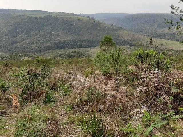 Fazenda de 100 Alqueires. 70 de capoeira - 16 km da Colônia Vitória. Guarapuava PR - Foto 18