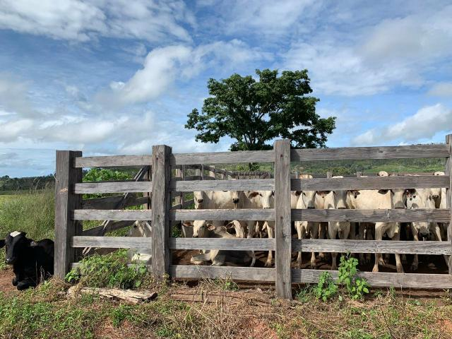 Vendo Fazenda de Gado em Grajaú