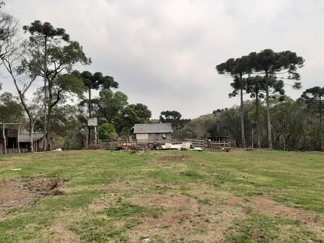 Fazenda de 100 Alqueires. 70 de capoeira - 16 km da Colônia Vitória. Guarapuava PR