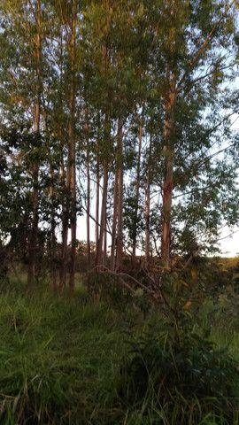 Sitio 20,10 hectares - Foto 10