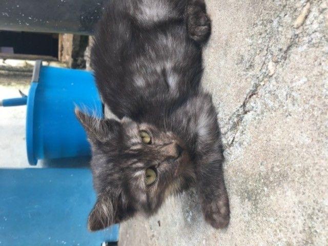 gatinhos para adoção  - Foto 5