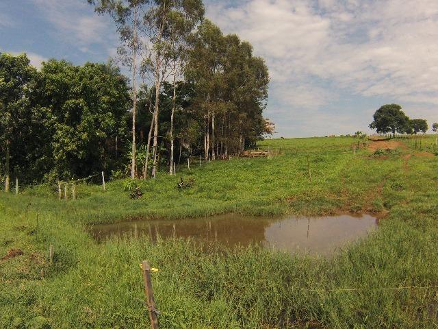 Fazenda Goianira 8 alqueres - Foto 10
