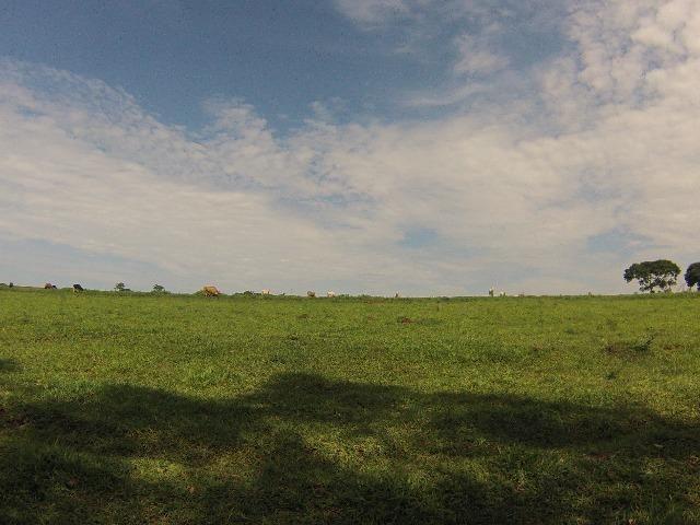 Fazenda Goianira 8 alqueres - Foto 15