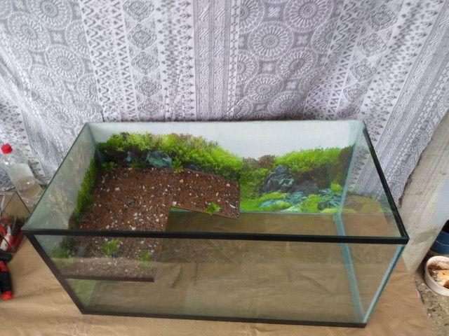Aquaterrario e aquários - Foto 4