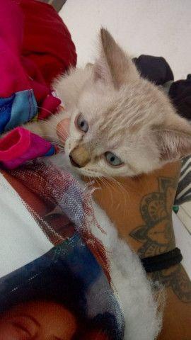 Lindos gatinhos para adoção ? - Foto 4